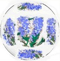 Purple Wisteria Dinner Plates